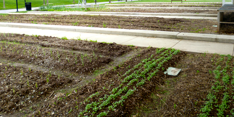 The Wishard Slow Food Garden on April 16, 2012.