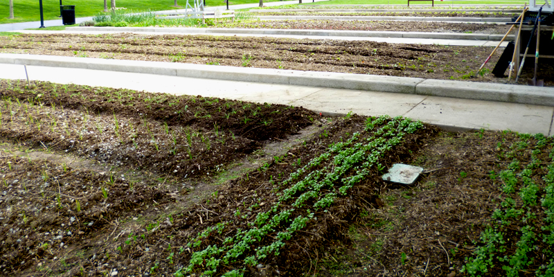 The Wishard Slow Food Garden on April 17, 2012.