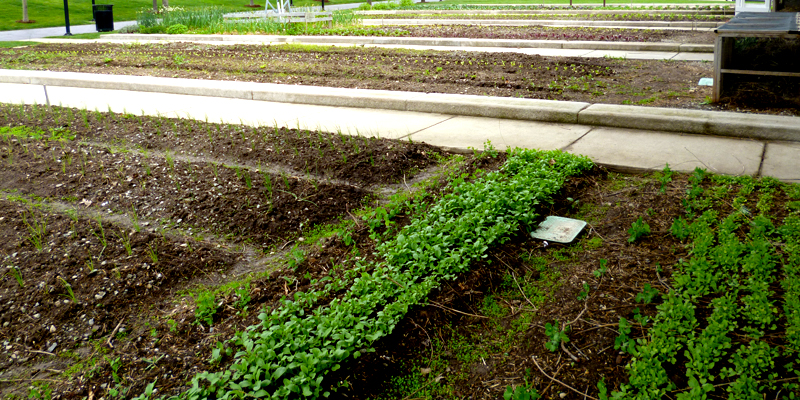 The Wishard Slow Food Garden on April 29, 2012.